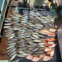 三重県 大アジ釣り