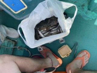 三重県|大翔丸 キス釣り爆釣り中