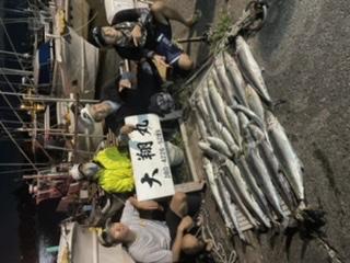 三重県|サワラ爆釣り大翔丸
