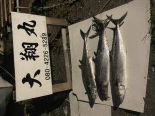 三重県|津大翔丸 サワラ爆釣り大翔丸
