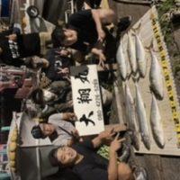 三重県|津大翔丸 ハマチ サワラ 釣りまくり