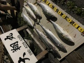 三重県|津大翔丸 サワラ ハマチ爆釣り