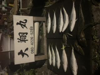 三重県 津大翔丸 サワラ爆釣りモード入りました