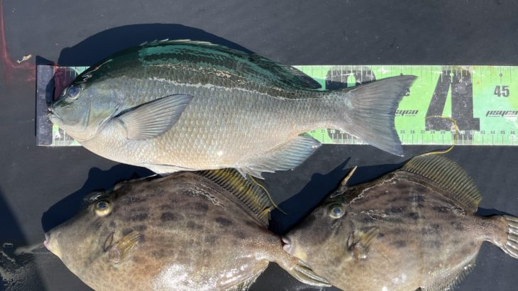 三重県|15日のフカセ磯釣り釣果