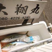 三重県|津大翔丸 青物キャスティング