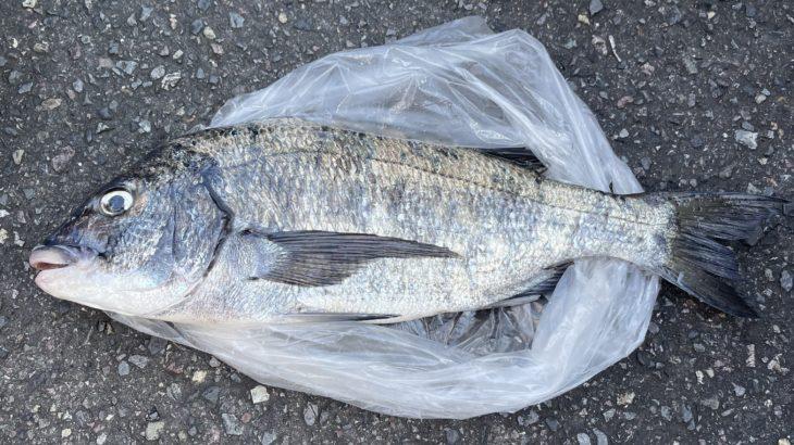 三重県 15日のフカセ磯釣り釣果